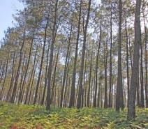 sous bois landes purextract